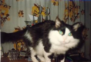 Piter Cat01