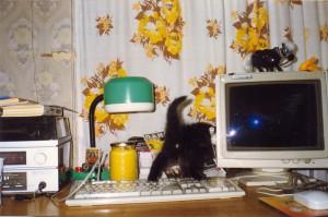 Piter Cat06