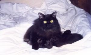 Piter Cat07