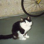 Коты: Саймона и мой