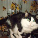 День петербургского кота