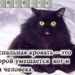 Кошачье домоведение