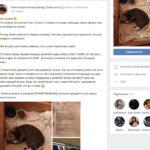 Благотворительный фонд «Помоги коту»