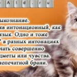 Кошачье языкознание