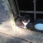 Котёнку нужна помощь