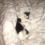 Котёнок Дарёна — коммунальная кровать