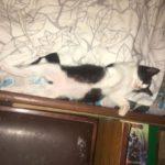 #Котёнок #Дарёна — свежие новости