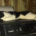 #Котёнок #Дарёна — три месяца спустя